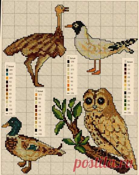 Несколько схем вышивки птиц