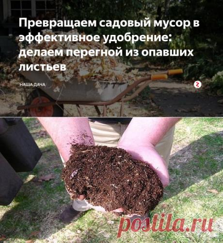 Превращаем садовый мусор в эффективное удобрение: делаем перегной из опавших листьев | Наша Дача | Яндекс Дзен