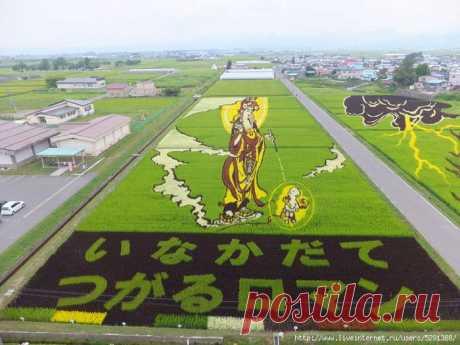 Огромные живые картины «растут» на рисовых полях в Японии.