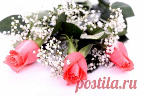 507919__pink-roses_p.jpg (909×606)