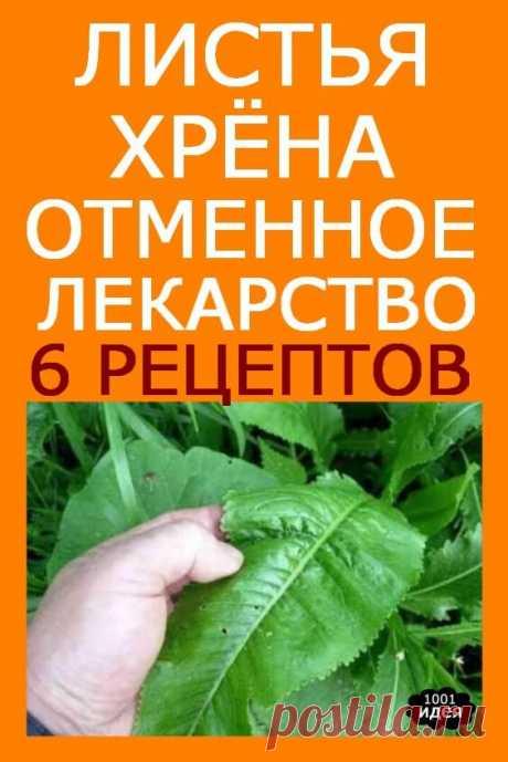 Листья хрена — отменное лекарство: 6 рецептов, которые заменят аптеку! | Тысяча и одна идея