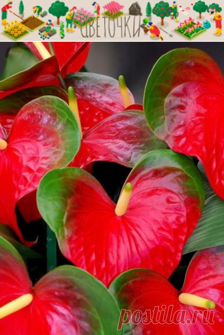 """Полив, опрыскивание и мойка домашних растений - Проект """"Цветочки"""" - для цветоводов начинающих и профессионалов"""