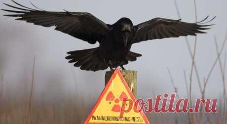Радиоактивное облако накрыло Европу после аварии в где-то в России или Казахстане | Darada