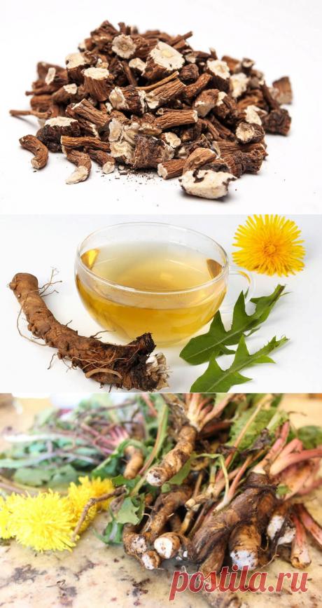 Чай из корней одуванчика: показания, противопоказания и рецепты
