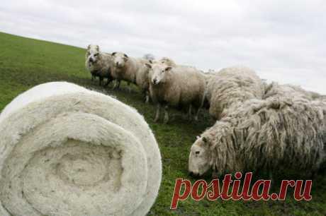 Утеплители на основе овечьей шерсти: экологически чистые материалы на страже комфорта владельца