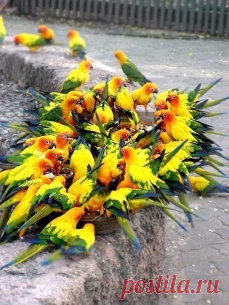 Яркий букет из попугаев вам в ленту