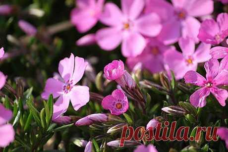 Сад и огород для ленивых: выбираем садовые цветы которые потребуют минимум ухода