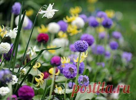 Десять самых ранних цветов для сада. Самые красивые весенние цветы - Садоводка