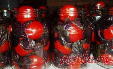 Готовим солёные помидоры с базиликом. Просто объеденье | Рекомендательная система Пульс Mail.ru