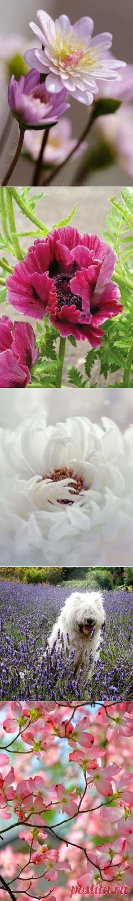 Flowers`•.¸¸.ஐ