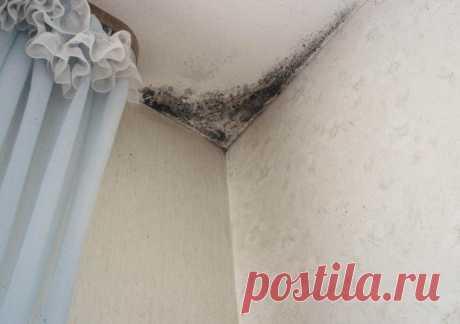 Как бороться с плесенью в ванной Ванная комната – это помещение с особыми условиями, к которым среди прочего относится высокая влажность, недостаточная интенсивность вентиляции и низкая освещенность. Все это создает предпосылки для п...