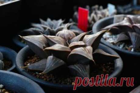 Самые необычные комнатные растения » Notagram.ru ТОП-10 10 необычных растений для дома. Редкие и необычные комнатные растения. Самые редкие комнатные цветы. Экзотические комнатные растения