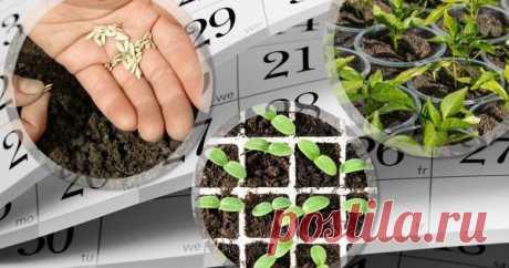 Что посеять в марте на рассаду Зима подходит к концу, а значит, совсем скоро начнется так любимый многими дачный сезон – время работ в саду и огороде. Предлагаем вспомнить, какие культуры нужно сеять на рассаду в первый весенний месяц, и делимся собственными мастер-классами.