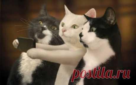 Лучшие селфи сделанные котами » Notagram.ru Доказательства того, что коты отличные фотографы и умеют делать селфи. Лучшие селфи сделанные котами, по версии кошачьего Instagram.