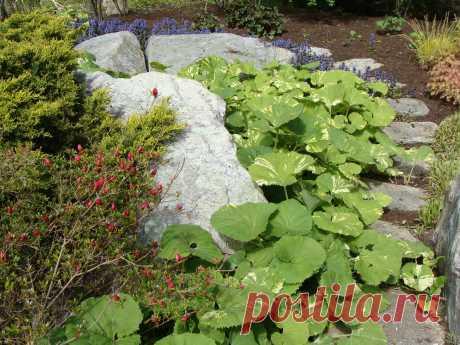 Wet Gardens and Rain Gardens - Классический - Сад - Нью-Йорк - от эксперта Maher & Greenwald Fine Gardens | Houzz Россия
