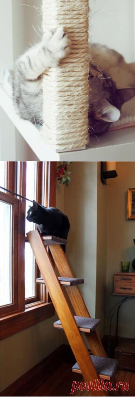 7 полезных советов для тех, у кого есть кошка