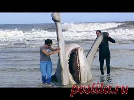 Одни на Весь Мир! Самые Редкие Акулы в Мире - YouTube