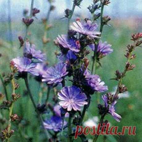 Treatment of a thyroid gland herbs
