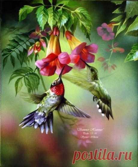 Колибри - самые маленькие птицы на земле, но какие красивые!!!) - запись пользователя Tina (Валентина) в сообществе Картинки для творчества в категории Животные и птицы