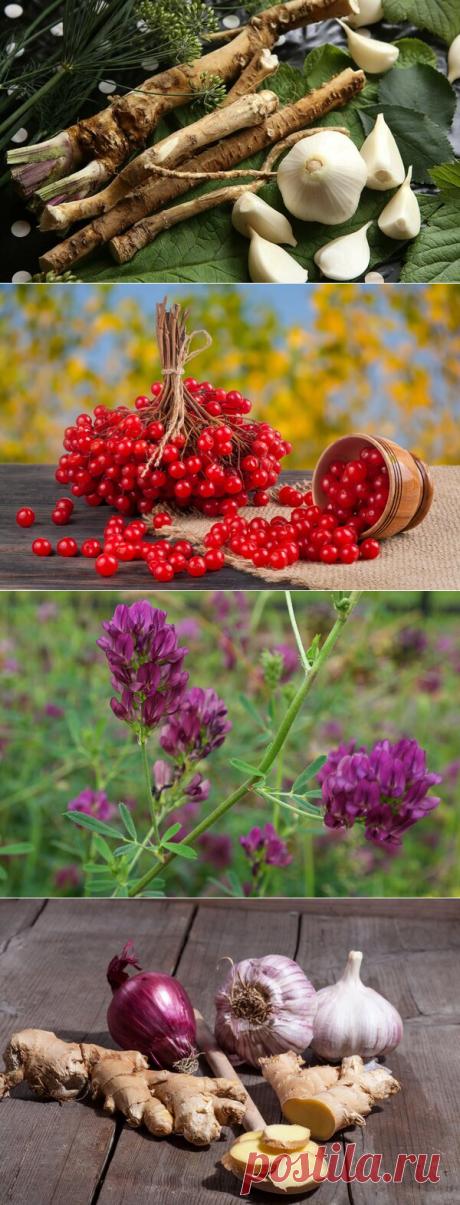 Растения, которые чистят сосуды и улучшают мозговое кровообращение | Здоровье проявляет красоту | Яндекс Дзен