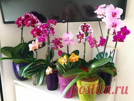 Цветущий сад на подоконнике: выбираем подходящие растения