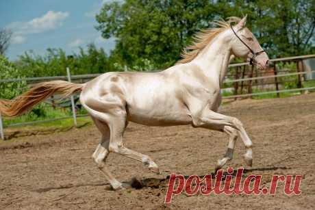 Видео: самые красивые и дорогие породы лошадей