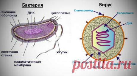 Как отличить вирусный насморк от бактериального: признаки вирусного насморка