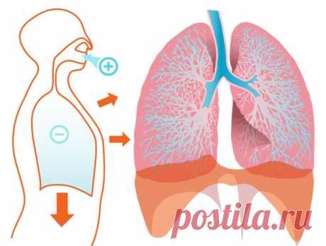 Дыхательная гимнастика: упражнения на каждый день. Как правильно дышать?