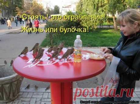 Котоматрица - ФОТО (06.12.2013).