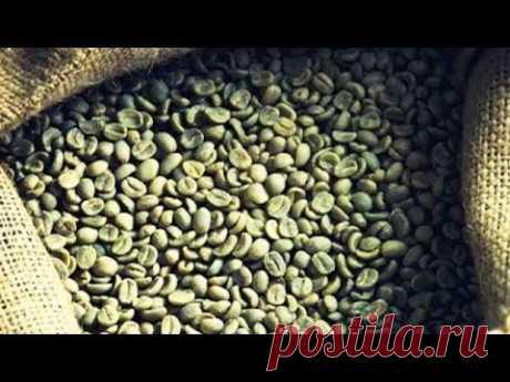 Вся правда о зеленом кофе (полный выпуск)   Говорить Україна - YouTube
