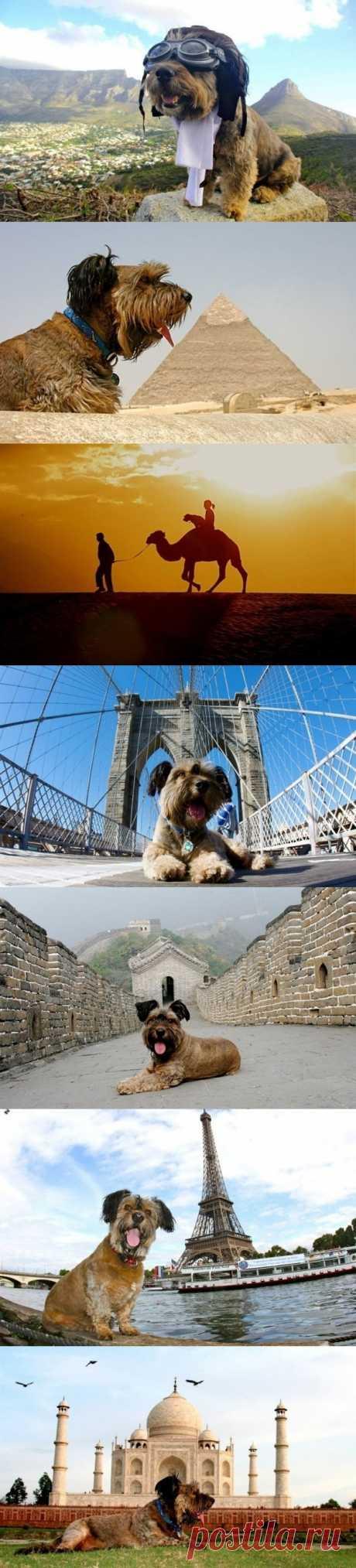 Трогательная история о псе-путешественнике