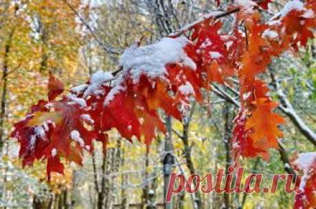 Осенний снегопад - это дверка в будущее.  Обрадовавшись утреннему одеянию мира, начинаешь отчётливо слышать лёгкий звон бубенчиков. Это в сердце оживает сказка.