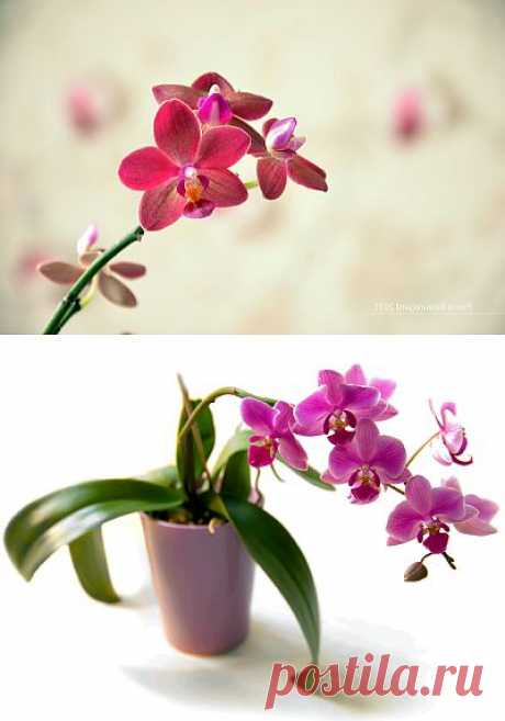 Care of an orchid in house conditions.