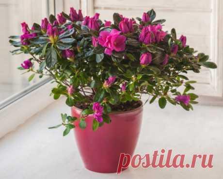7 комнатных растений, которые цветут зимой | Полезно (Огород.ru)