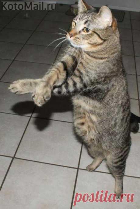 Эх, танцуем!