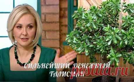 ¿Tolstyanka - el árbol monetario, pero cómo hacer por su TALISMÁN REALMENTE MÁS FUERTE MONETARIO?!   los libros de oniromancia, los horóscopos, la adivinación
