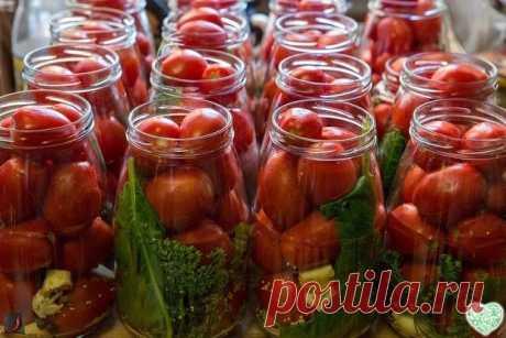 Консервирование помидор с малиновыми листьями — Бабушкины секреты