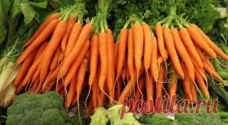 Большой урожай моркови. Мой способ | Сделай сам | Яндекс Дзен