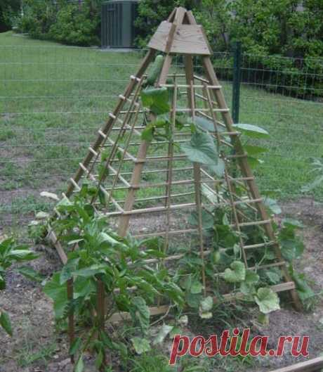 La pirámide de pepinos - las ideas hortelanas (la foto y el vídeo)
