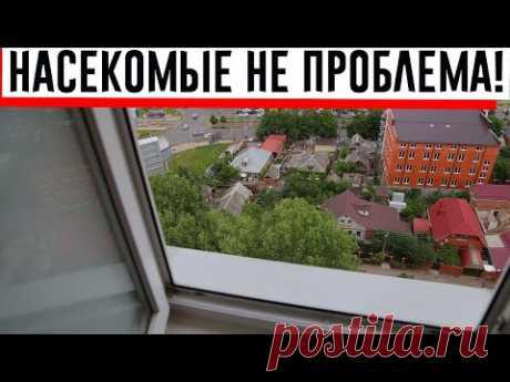 Сетка на окнах мне не нужна. Бабушка научила, как не пускать насекомых при открытых настежь окнах!