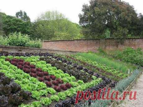 Как снять сглаз и порчу с огорода и поставить защиту на урожай: