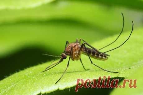 GISMETEO: Роспотребнадзор предупредил об опасности комаров - Животные | Новости погоды.