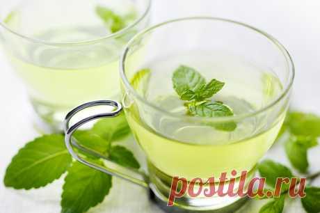 Зеленый чай с мятой: польза и вред, рецепты заваривания