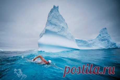 4 марта 2015 года пловец Льюис Пью совершил самый южный заплыв в истории человечества. Бывший адвокат, он посвятил жизнь спасению антарктического «Эдемского сада» – моря Росса, которое теперь может стать крупнейшей охраняемой морской территорией на Земле.