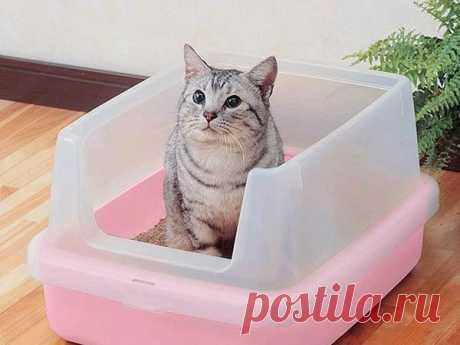 Как избавиться от запаха кошачьей мочи – проверенные способы