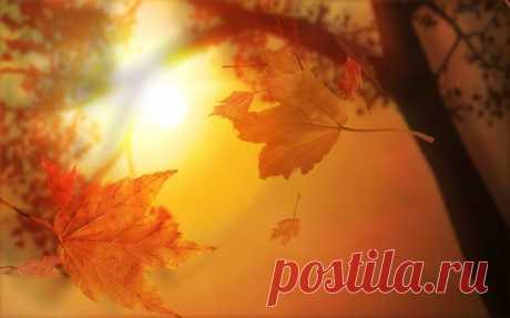 Разучиваем стихи про осень) Осень ( В. Авдиенко) Ходит осень по дорожке, Промочила в лужах ножки. Льют дожди И нет просвета. Затерялось где-то лето. Ходит осень, Бродит осень. Ветер с клёна листья Сбросил. Под ногами коврик новый, Жёлто-розовый - Кленовый. Осень (К. Бальмонт) Поспевает брусника, Стали дни холоднее, И от птичьего крика В сердце только грустнее. Стаи птиц улетают Прочь, за синее море, Все деревья блистают В разноцветном уборе. Солнце реже смеётся. Нет в цветах благовонья. Скоро…