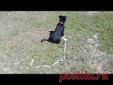 La educación y el adiestramiento del perro | Milota. La foto zveryat sobre el Postlimo | del Postlimo
