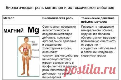 Magnesium and its role in an organism