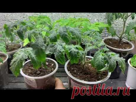 (2) Зимний обзор стеллажей с растениями. - YouTube