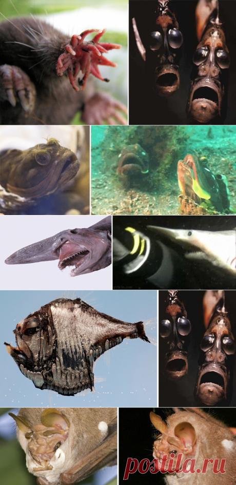 15 реальных животных, про которых можно снимать фильмы ужасов - Мир Путешествий